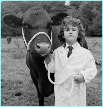 By heck, that's a cow, that is - and a reet good un an' all - copyright Sue Packer