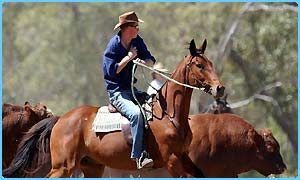 Prince Harry rounds up cattle