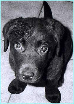 Another black and white photo - this time a very photogenic puppy by Ami Gregory, 10