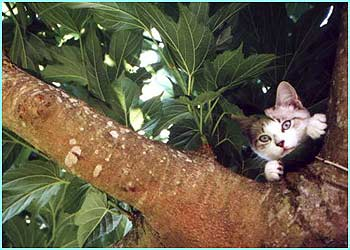 Hello kitty! This one is Cat in Tree by Gabby Stone, 9