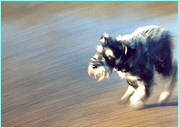 This action photo of a dog running was taken by Juliette Oxford, 17