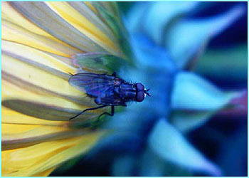 The awards encourages budding young photographers to take photos of animals of any kind. Here is The One-winged Fly by Kristian Adamatsky, 11