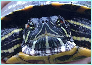 ..to more exotic animals like this extreme close-up of a turtle by Kitty Jones, 11