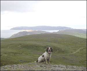 Tim Jones' dog Bob at Tal-y-Fan quarry above Penmaenmawr with the Gt Orme in the background
