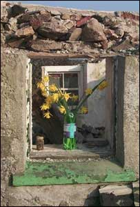 Picture of daffodils in window of house at Pencarnisiog, Anglesey just before being demolished (David Lewis-Waller)