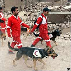 Iranian Red Crescent members take their dogs through the rubble of Bam