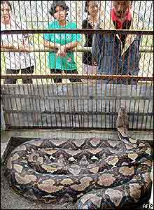 Python in its cage at Curugsewu recreational Park, Kendal, Indonesia
