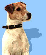 Jack Russell, BBC