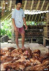 An Indonesian farmer looks at his dead chicken in a village in Bali