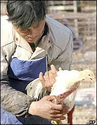 A man prepares to kill a chicken for a customer at a market in Beijing Tuesday