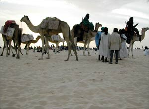 Camels carry salt tablets brought from the salt mines in Taoudenni, northern Mali, for the opening ceremony