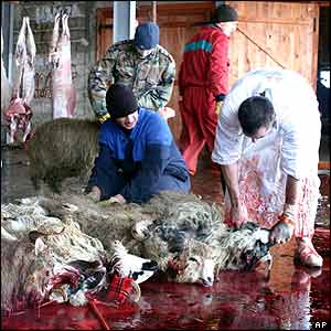 Bosnian Muslim butchers slaughter sheep in Sarajevo