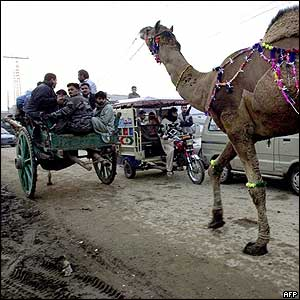 Pakistani Muslims lead away a camel bought for the festival in Lahore