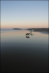 Liz Howell took this picture of Llangenith beach evening surfing, with my dog Sophie.