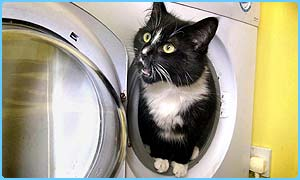 Mia the cat survived a spin in a tumble drier