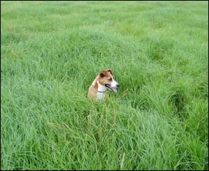 Jane Lack's dog Bess in the long grass near Llanmartin, before they moved to Canada
