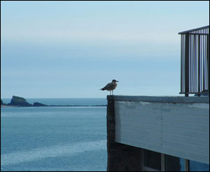 Dan Porter from Trecastle sent this shot of a seagull at Tenby