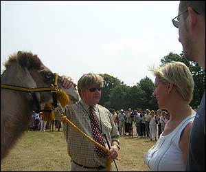 A camel is paraded by a handler - a British firm specialising in handling camels was hired for the event