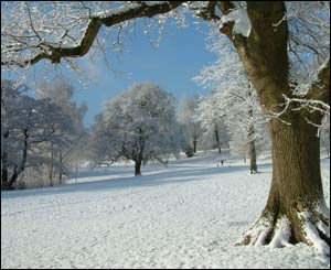 Catherine Meredith from Sketty took this shot of Singleton Park in Swansea in the snow