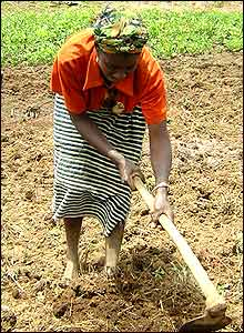 Woman working the land