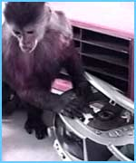 A monkey changes a CD