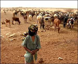 Cattle farmer