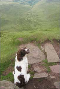 Flora on the top of Pen Y Fan, as sent in by Hamo Forsyth
