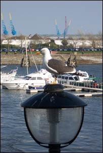 A seagull taking a rest at Cardiff Bay, captured by Matthew Perkins