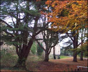 David Baker took this photo of Caldicot Castle through the trees