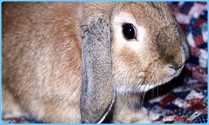 Children like to talk to their pets, like this rabbit