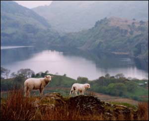 Scott Allott from Cardiff spotted these sheep while he was enjoying the scenery of Snowdonia