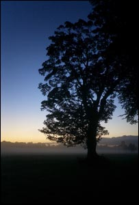 Tim Dyer from Canton took this picture at sunrise while walking his dog Maggie in Pontcanna Fields