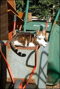 Nel the cat enjoying the sun, sent by Caeron of Denbigh