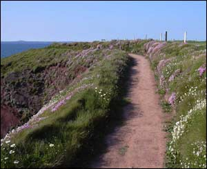 Coastal path at St Brides, Pembrokeshire (Matt Davies)