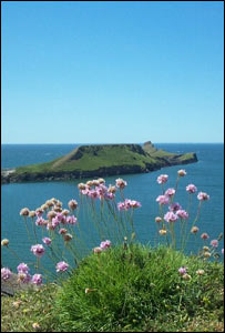 Worm's Head, Rhossili, Gower, with pink sea thrift in the foreground, from Sian Thomas