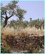 Beautiful countryside and an Israeli watchtower in the distance.