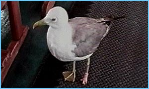 _40360643_seagull300.jpg