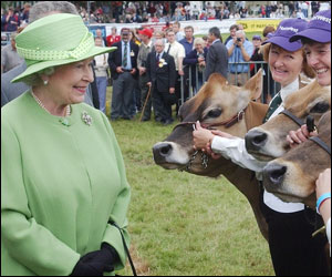 Queen in cattle ring