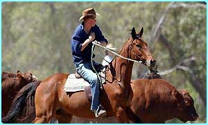 Prince Harry rounds up cattle in Oz