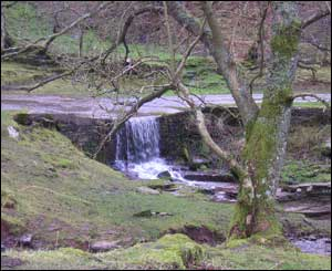 Paula Hall took this picture of a waterfall on the way down from Hay Bluff north of Hay-on-Wye