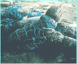 Seal tangled in a net from Ocean Conservancy