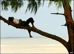 A Thai worker takes a nap on a tree by the Narathiwat beach in southern Thailand, 02 November 2004.