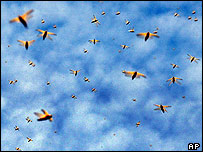 A swarm of locusts in the sky above Senegal