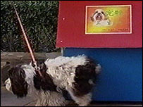And, if you thought human loos were strange, check this out! The first doggie toilets were installed on the streets of Beijing  - woof!