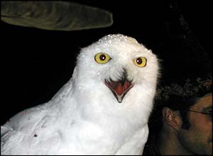 Haughty Hedwig got in on the act too!