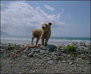 Geoff White from London took this picture of his dog Max on holiday at Dinas Dinlle, Gwynedd, north Wales