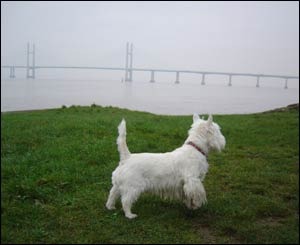 Mike Wilson from Caldicot sent in this picture of Casper at Black Rock, with the Second Severn crossing in the background