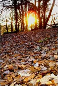 Leaves against a setting sun at the Kymin, near Monmouth (John Parker)