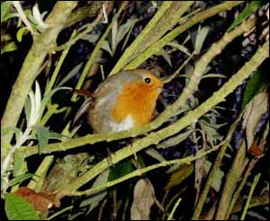A robin that greeted us in the car park at the National Wetland Centre of Wales (Chris Stirling, Swansea)