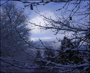 Snowdon through the trees on Christmas Day in the morning from Liam Ferris' garden in Rhyd Ddu, Gwynedd